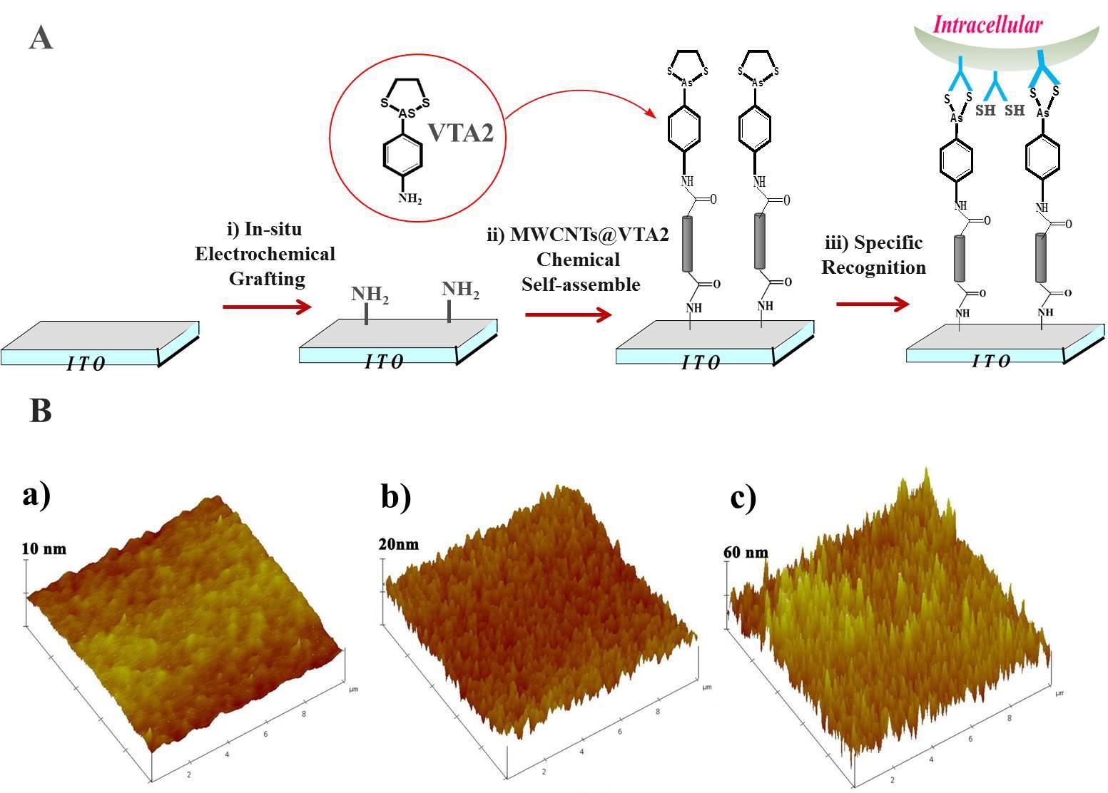 电化学测量方法贾铮_三维碳纳米管细胞电化学传感器研究取得新进展